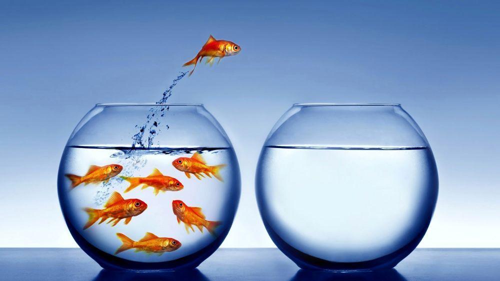 Liberare i pesci for Quanto vivono i pesci rossi